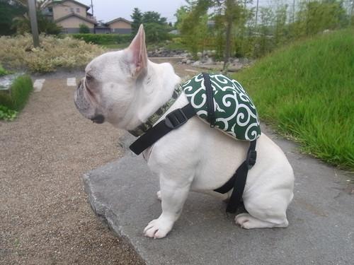犬リュック唐草
