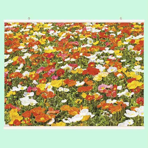花(ポピー) 【ハンガー付き】