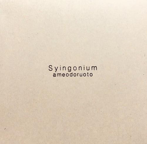 《CD》 Syingonium / ameodoruoto