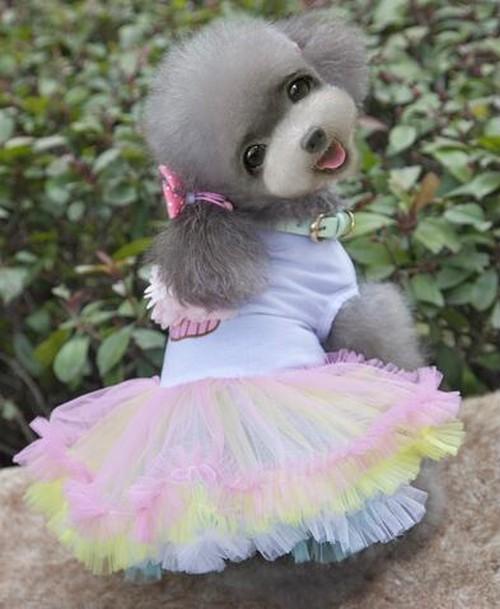 【アウトレット】★かわいい犬服ワンピ/ドレス   ケーキチュチュドレス
