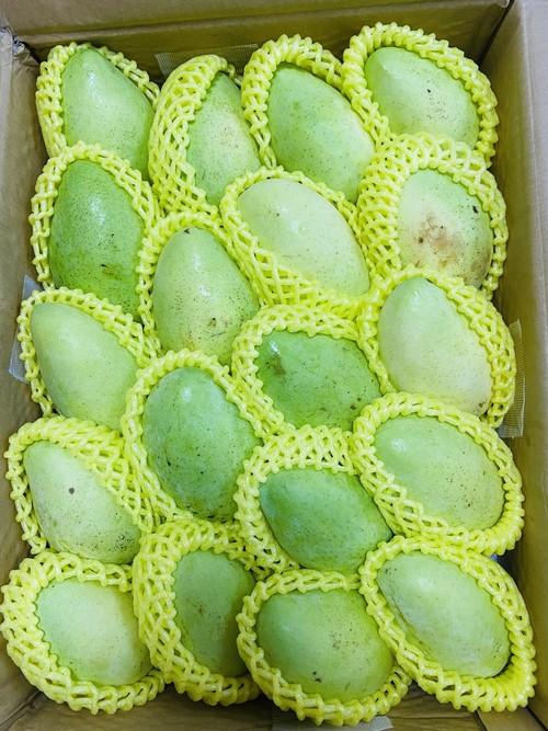 Vietnam sour mango 5kg