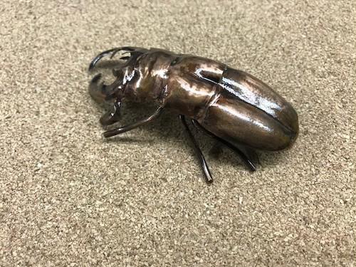 板金職人の作った昆虫(クワガタB)銅