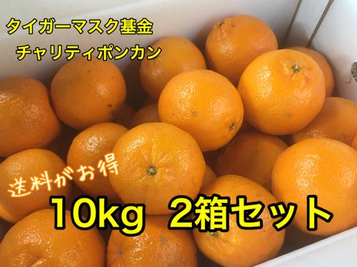 チャリティぽんかん 10kg(約60~70個入)2箱セット