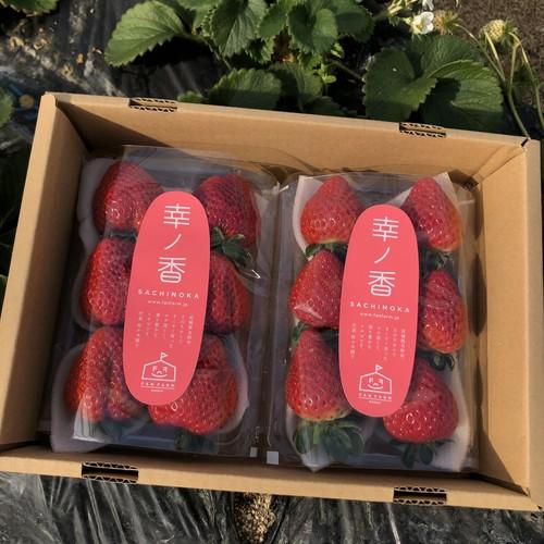 宮城県名取市産イチゴ 土耕栽培さちのか 約280g×2パック
