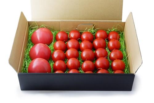 大玉トマト・中玉トマトセット