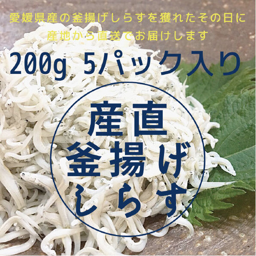 この時期限定 愛媛県伊方の釜揚げしらす 1キロ