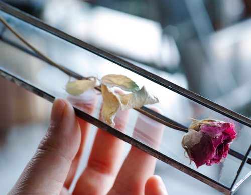 植物標本:ドライフラワー『ローズ ピンク』