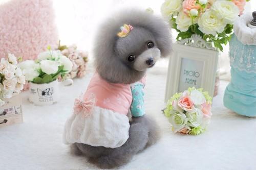 【アウトレット】★かわいい犬服ワンピ/ドレス  リボン柄ダウンワンピ