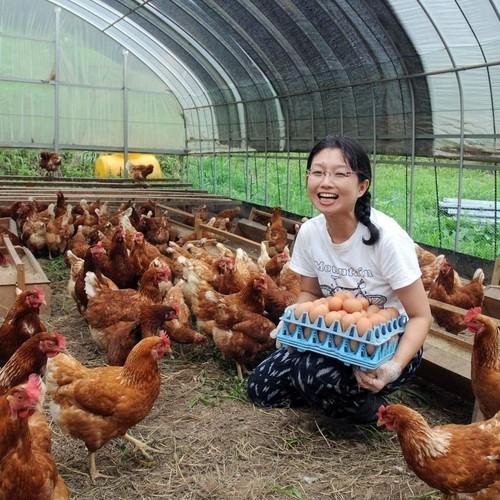 ほんまの卵(有精卵)120個(12パック) M・Lサイズ混合