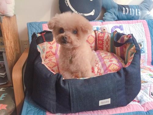 Dog *Fabric【ふわふわカドラー Mサイズ】