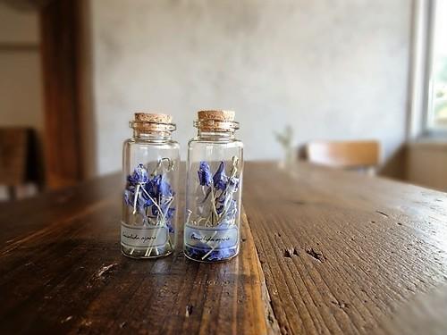 植物標本 Botanical Collection■No.13-B ラークスパー ブルー