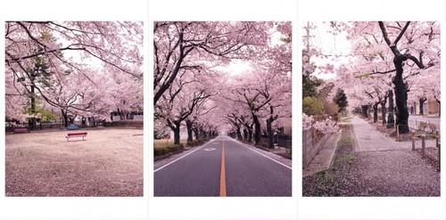 【3枚セット】桜の森 夜の森 ポストカード