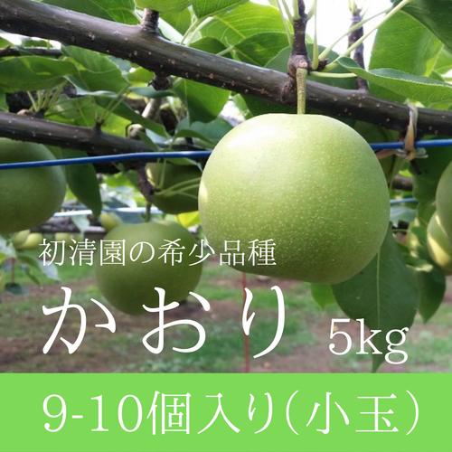 【希少な芳醇梨】かおり小玉 9-10個入り 5kg