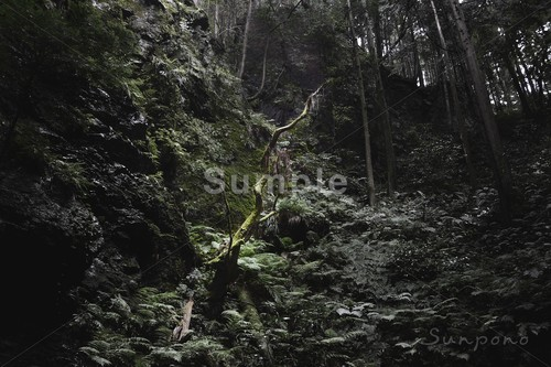 The Japanese Forest #002
