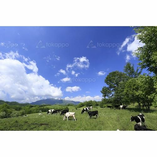 八千代牧場の夏