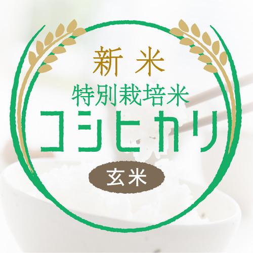 新米・特別栽培米 コシヒカリ 玄米30kg〈1週間以内で発送〉