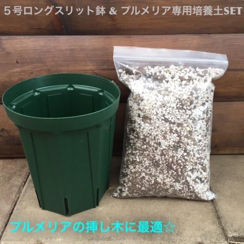 プルメリア専用培養土とスリット鉢のセット(5号ロングスリッド鉢)