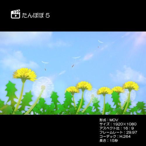 たんぽぽ5(上昇)