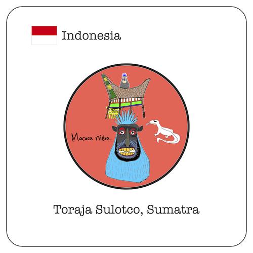 インドネシア トラジャ スロトコ スマトラ / 100g