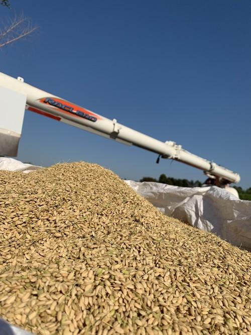 2020年 新米 3キロ(玄米)