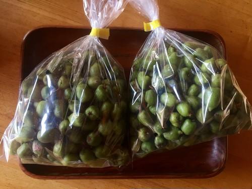 【未選別・加工用】自然栽培 サルナシ 1kg【小玉・傷あり】