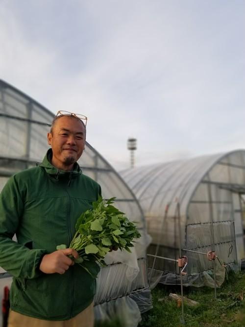 定期便 旬の川辺農園おまかせアジア野菜&ハーブセット