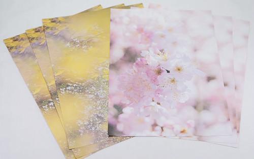ラッピングペーパー 桜と雪柳2018(2柄×3枚・6枚セット)