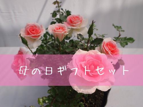 【全国配送】ギフトセット(ミニバラ鉢植え)