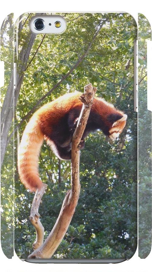 iPhone6がレッサーパンダ~Red Panda~