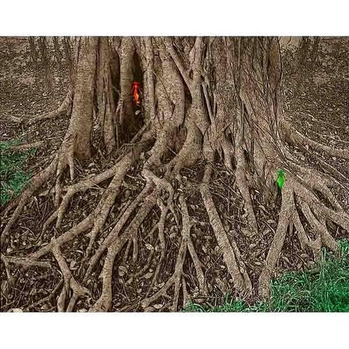 神秘の森・26(ガジュマルの根03)