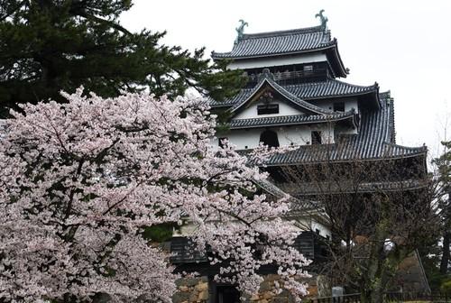 ポストカード 島根県松江城