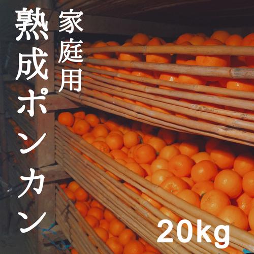 送料無料 熟成ポンカン家庭用20kg M〜Lサイズ 熊本県産