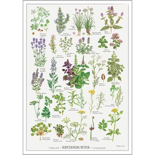 アート ポスター A2 サイズ KOUSTRUP & CO. - Herbs ハーブ