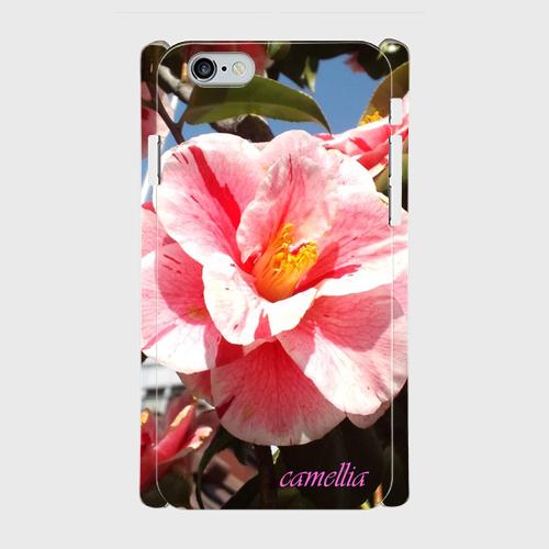 「camellia1」