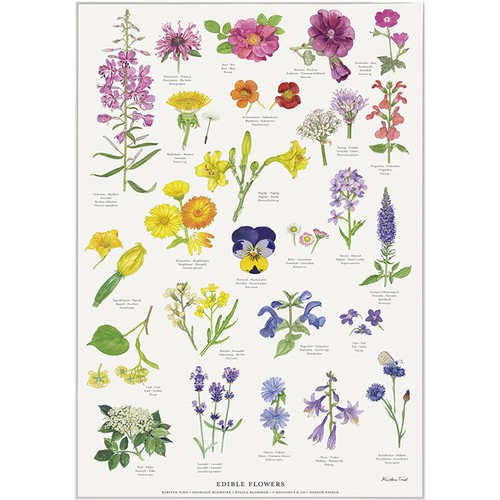 アート ポスター A4 サイズ KOUSTRUP & CO. - Edible flowers 食用可能な花