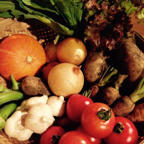 【季節の野菜セット M 】  八ヶ岳からの贈り物