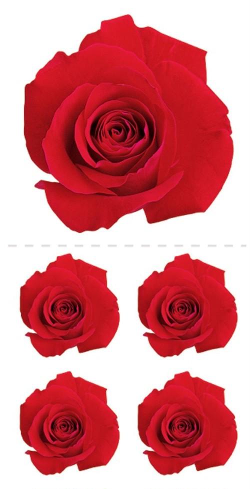 Red Roses / PH