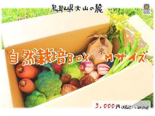 大山野菜Box Mサイズ