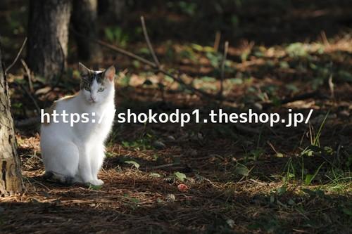 佇む猫_4_dsc2743