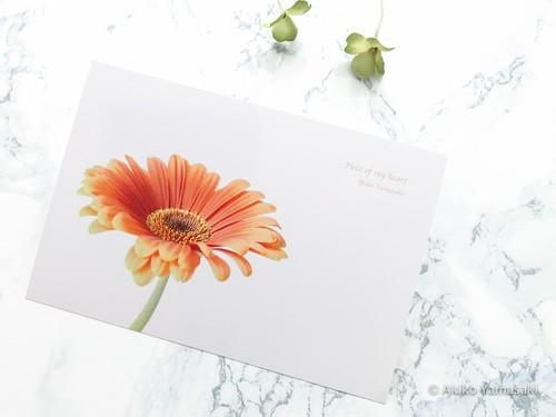 フォトポストカード OrangeGerbera