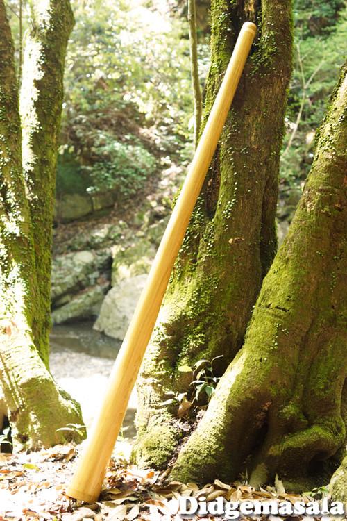 No.052 ディジュリドゥ(木の種類:桜(シウリザクラ) / キー: E )送料無料