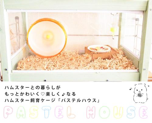 【残1】パステルハウス(Mサイズ)