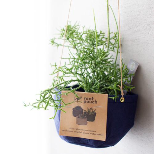 [吊るす植物]リプサリス・ケレウスクラ ハワース