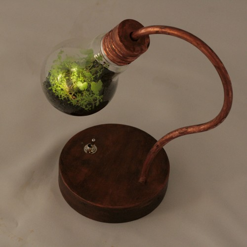 bulb terrarium mini
