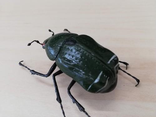 「昆虫模型」カナブン