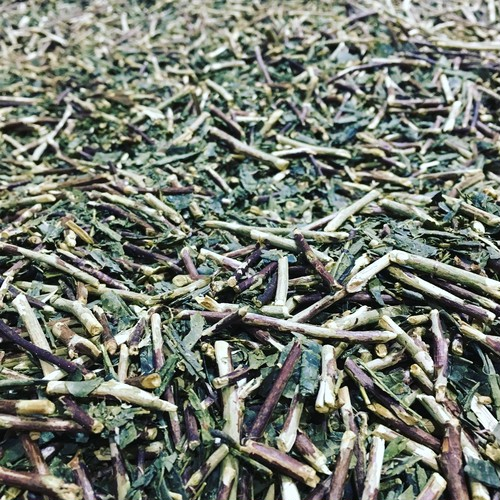 やさしい都農番茶 有機栽培茶100%使用