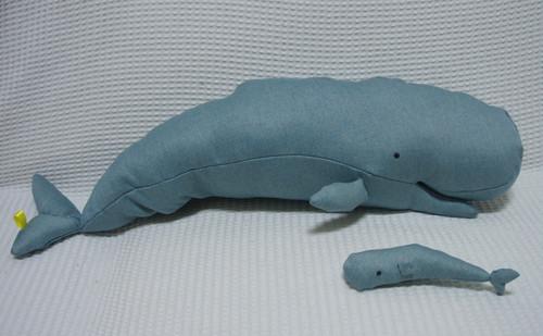 マッコウクジラ Sperm whale
