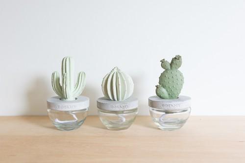 Cactus f.diffuser