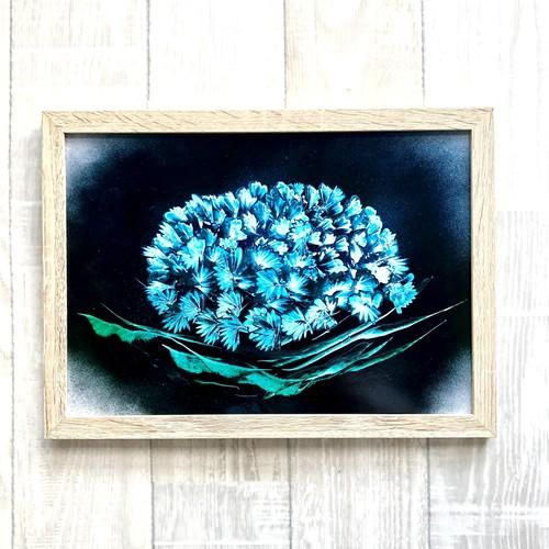 ドローイング - 紫陽花 あじさい 1