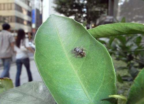 糸崎公朗『自然(=芸術)は都会の中にある:アオオビハエトリ/銀座』R8390284